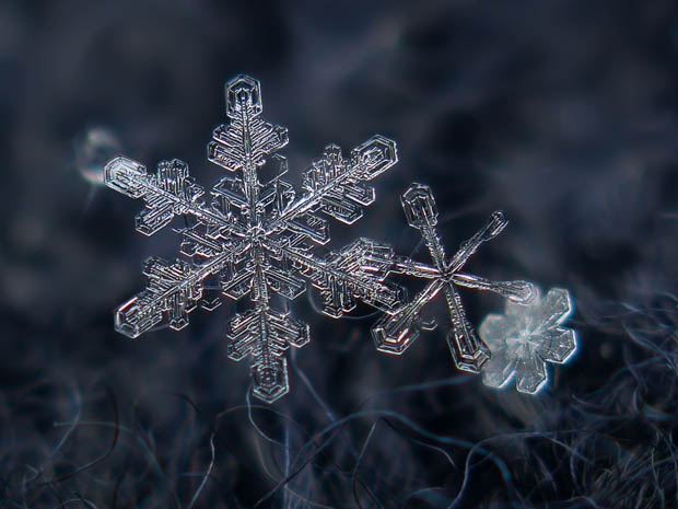 macro snowflake photography ampinspire