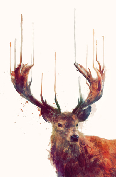 Stag_Web