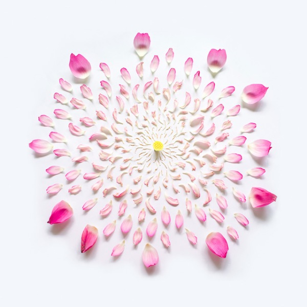 exploded-flowers-by-fong-qi-wei-7