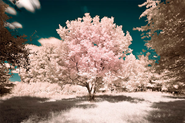 beautiful-infra-red-photographys-06