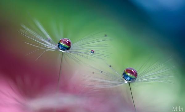 Rainbow-magic-by_-Miki-Asai