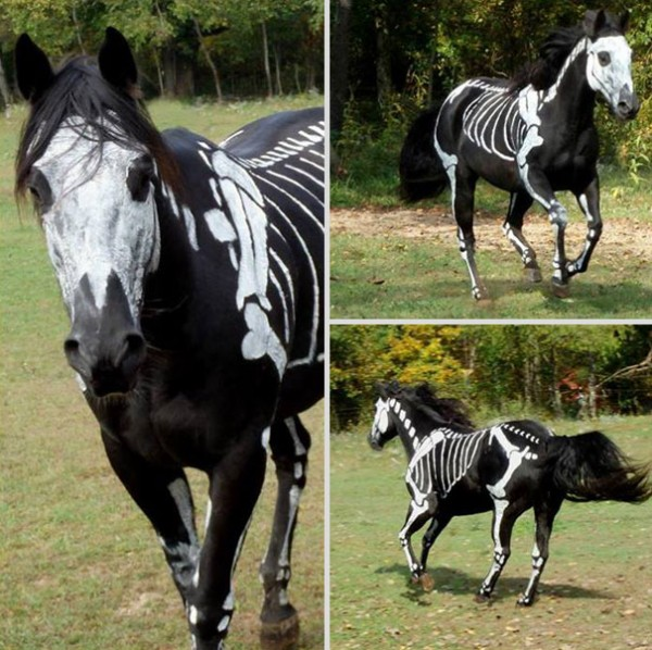 20+-Creative-Halloween-Costumes-For-Pets-18-600x598