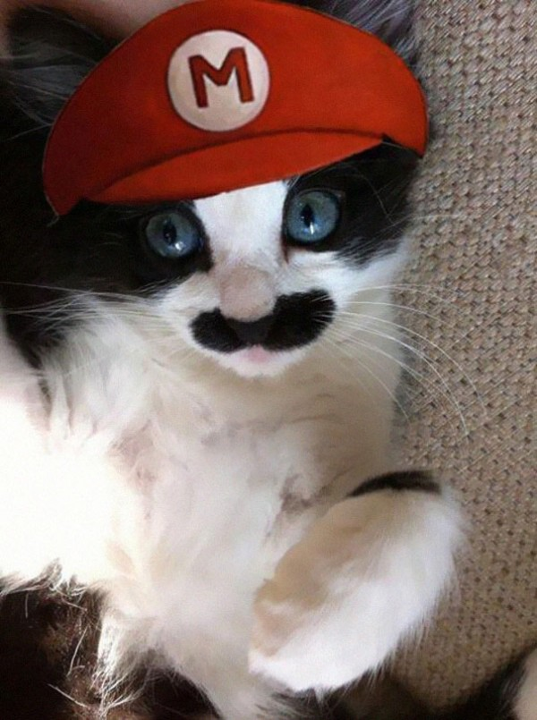 20+-Creative-Halloween-Costumes-For-Pets-4-600x805