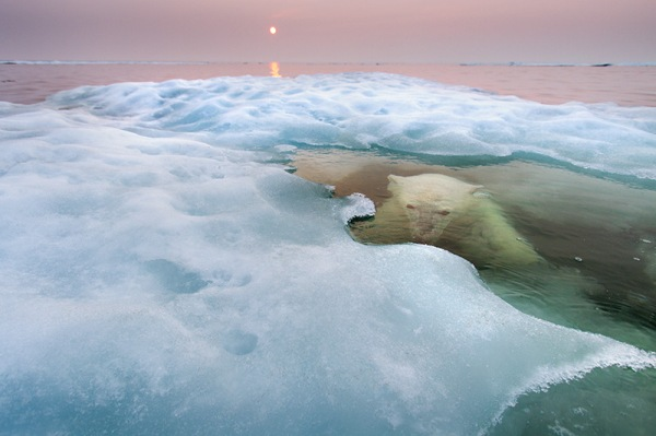 28_Paul-Souders-USA-The-water-bear