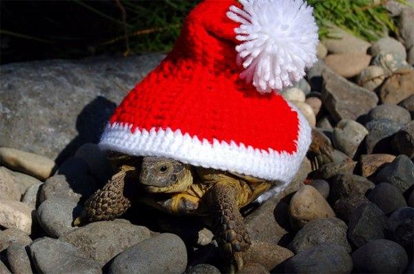 Tortoise Cozy Inspire