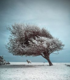 beautiful-infra-red-photographys-11