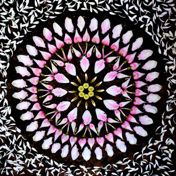 danmala541gerbera-daisy-gazania-tulip-alstroemeria