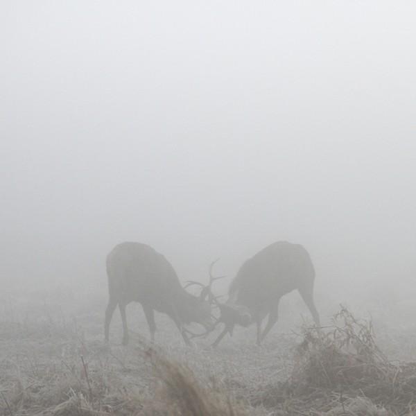 Deer-Photography-by-Sirli-Raitma-2