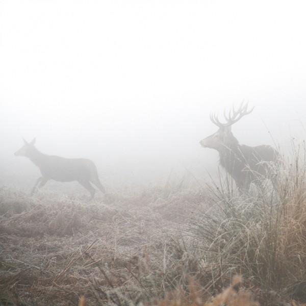 Deer-Photography-by-Sirli-Raitma-4